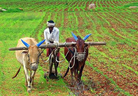 farming-india-food-security-green-revolution-photo